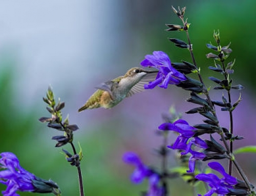 Top 5 Plants to Attract Birds and Grow Birdseed