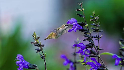 Bird on Flower